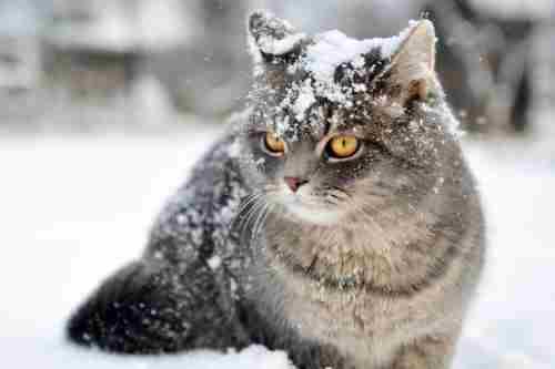Погода на 5 лютого: зима повільно повертається в Україну, подекуди сніжитиме