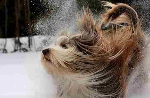 Погода на 10 січня: у кількох областях вітер посилиться до штормових значень
