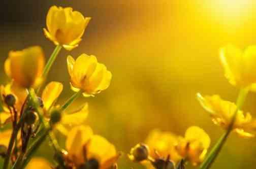 Погода на 20 травня: подекуди до +30, а на Заході – незмінні грози