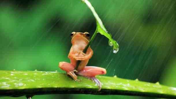 Погода на 9 липня: дощі та прохолода охоплять пів-України