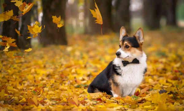 Погода на 12 жовтня: в Україні буде сухо і тепло