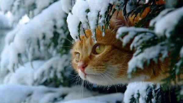 Погода на 1 грудня: Перший день зими українці зустрінуть з мокрим снігом