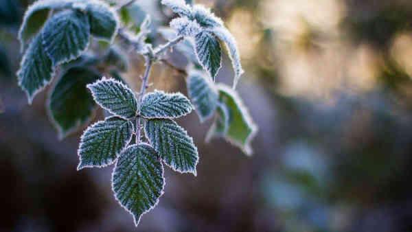 Погода на 5 грудня: буде сонячно та сухо