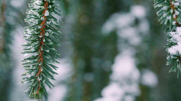Погода на 11 січня: без морозів, але з дощами та мокрим снігом