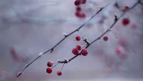 Погода на 19 січня: Водохреще буде з легким нічним морозом