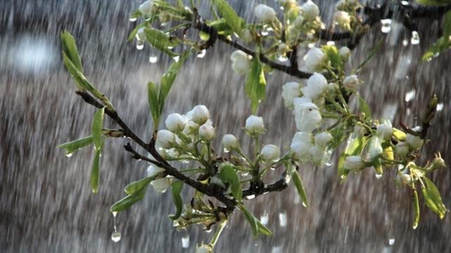 Погода на 15 квітня: дощ та холод розділить Україну навпіл