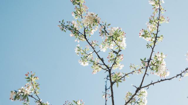 Погода на 18 квітня: вдень сонячно і без опадів, а вночі – заморозки