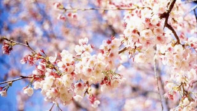 Погода на 23 квітня: розпочнеться відчутне потепління, але ночі – холодні