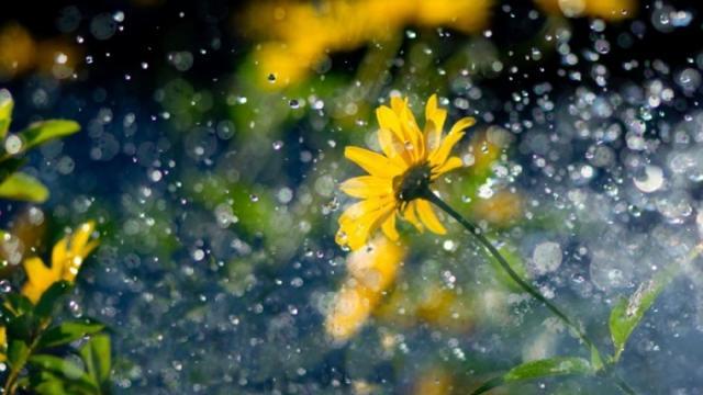 Погода на 14 травня: після дня без опадів частину України знову накриють дощі