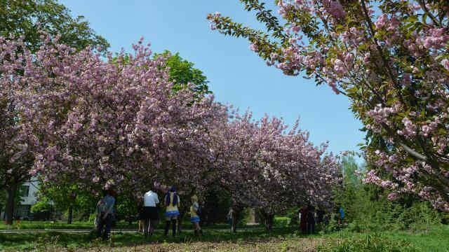 Погода на 28 квітня: в Україні буде тепло та сонячно, на заході – до +20