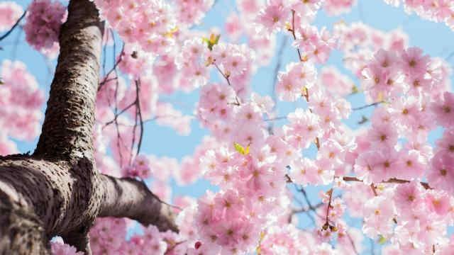 Погода на 30 квітня: в одній частині України – грози і дощі, в іншій – сонце