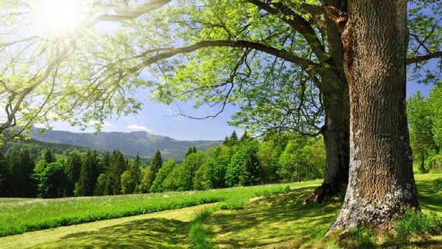Погода на 13 травня: в Україні буде сонячно, але не спекотно