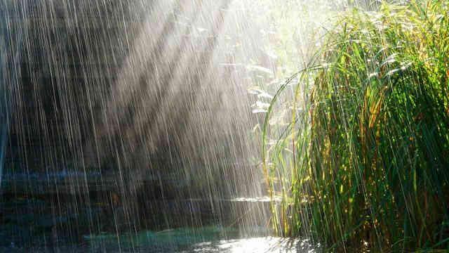 Погода на 15 травня: Україну накриють дощі, лише на півночі без опадів