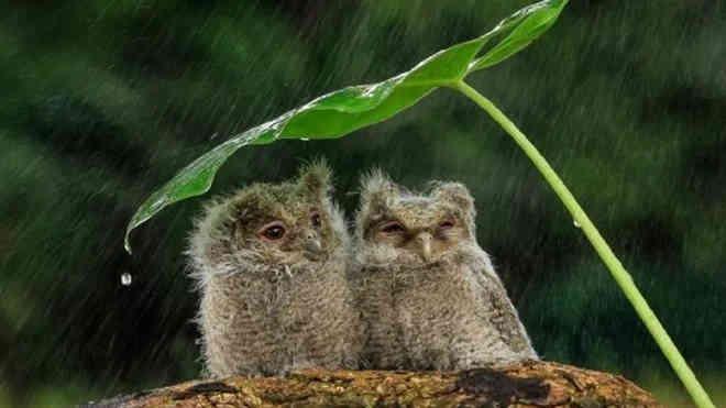Погода на 27 травня: надалі йтимуть дощі, але трохи потепліє