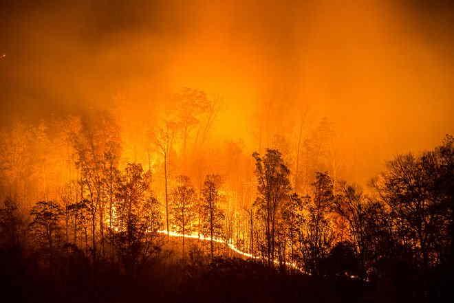 Сибір продовжує горіти: 500 осередків вогню, площа пожежі росте