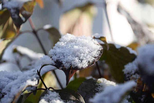 Прогноз погоди на 30 листопада: похолодання і мокрий сніг