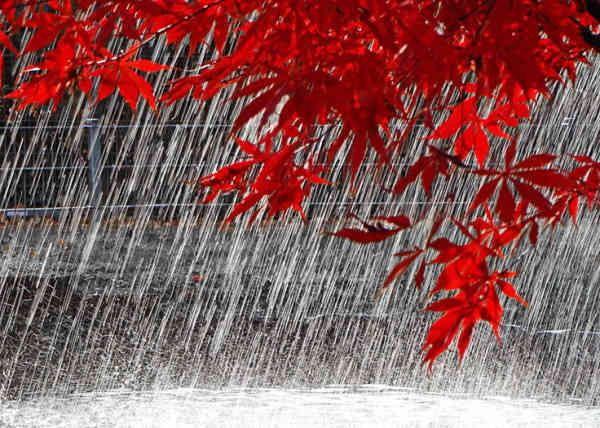 Погода на 28 листопада: дощі зі сходу перемістяться у західну Україну