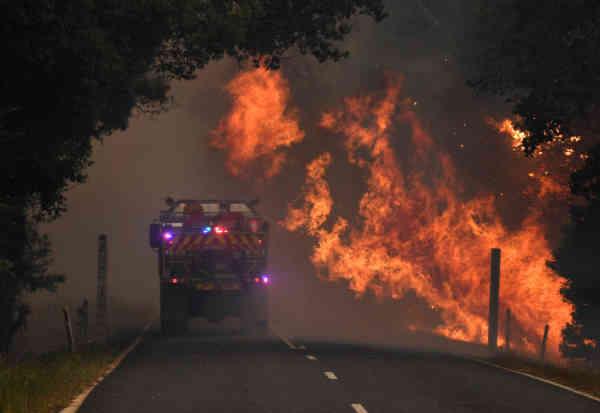 Австралія у вогні: загинуло понад один мільярд тварин