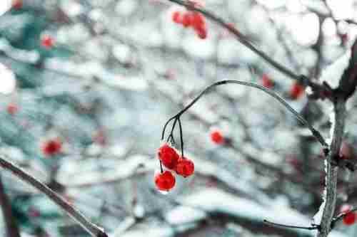Погода на 28 лютого: останній день зими буде по-зимовому підступним