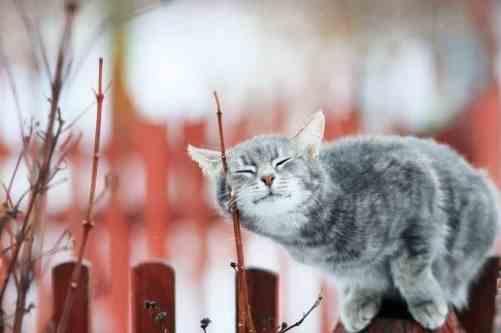Погода на 1 квітня: в Україні буде сонячно і по-весняному тепло