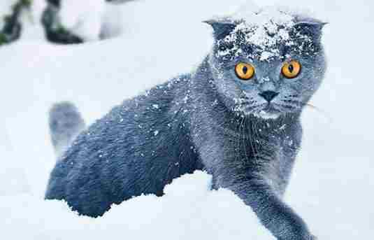 Погода на 15 січня: сніжитиме майже по всій країні