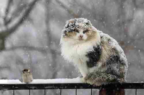 Погода на 13 лютого: В Україні очікується мороз і мокрий сніг