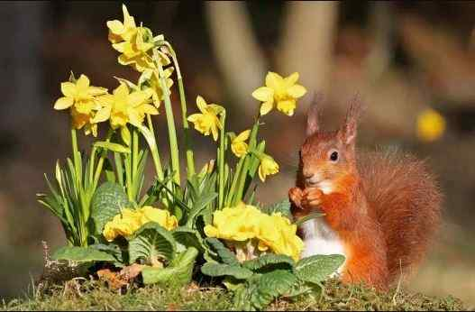 Погода на 19 квітня: весна повертається, але подекуди обіцяють заморозки