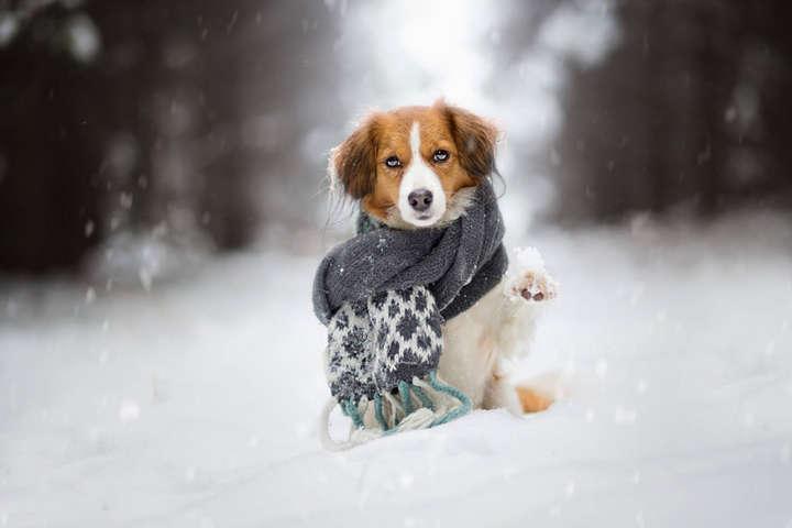Ожеледиця і мокрий сніг: прогноз погоди в Україні на 9 січня