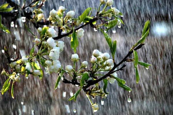 Україну накриє спека, але з дощами: прогноз погоди на 29 квітня