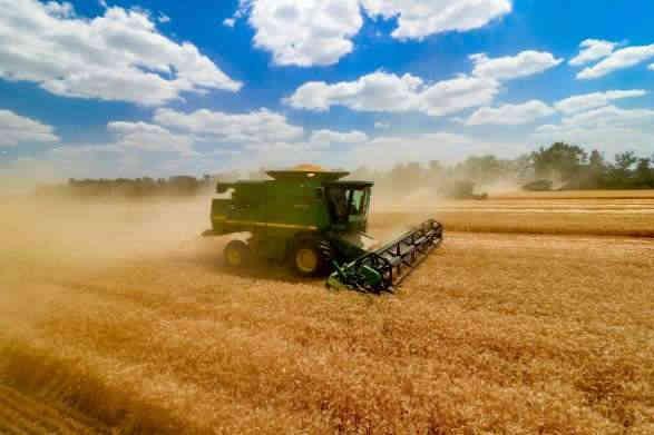 Жнива в Україні: вже намолочено майже 40 млн тонн зерна