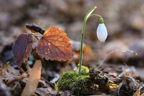 Погода на 29 березня: в Україну повільно повертається весняне тепло та сонце