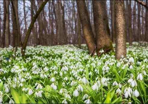 Погоди на 25 березня: сонячно, тепло, але подекуди можливі весняні дощі