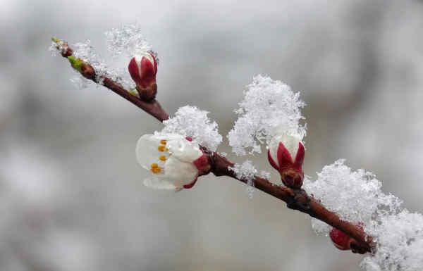 Прогноз погоди на 14 квітня: в Україні похолодає, подекуди пройде мокрий сніг