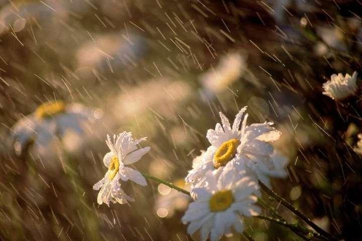 Погода на 14 серпня: В Україні похолодає, місцями дощі