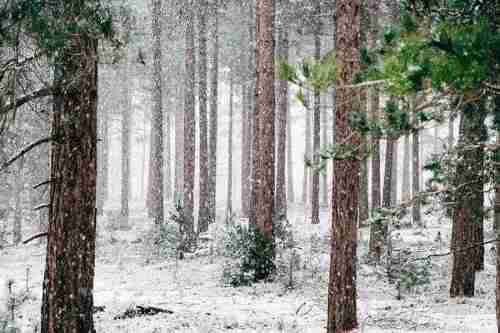 Погода на 12 січня: негода та снігопади послабшають, але Захід накриють хуртовини