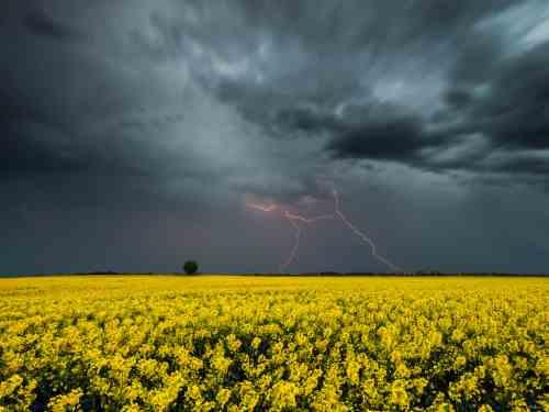 Погода на 3 червня: в Україні литимуть дощі та гримітимуть грози