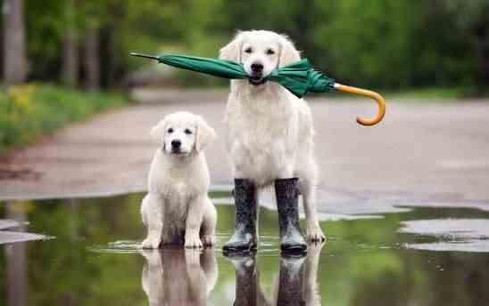 Погода на 22 травня: дощі із Заходу йдуть на всю Україну