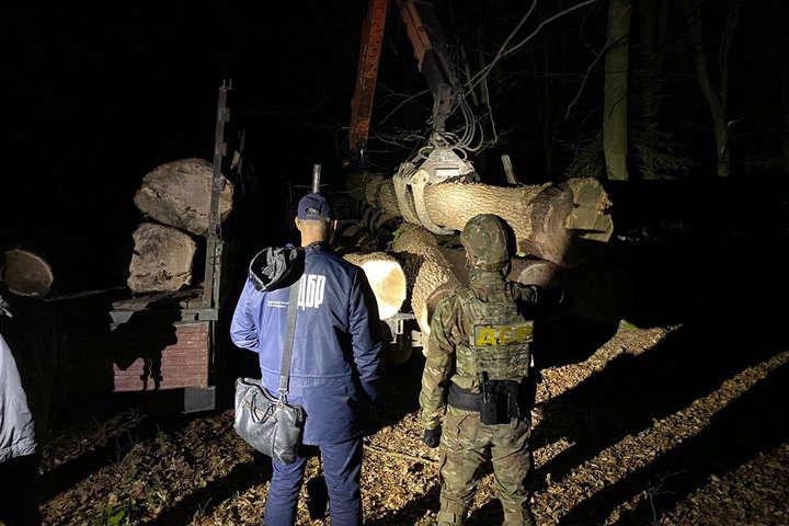 За два місяці на Львівщині незаконно вирубали дубів на 1,2 млн грн