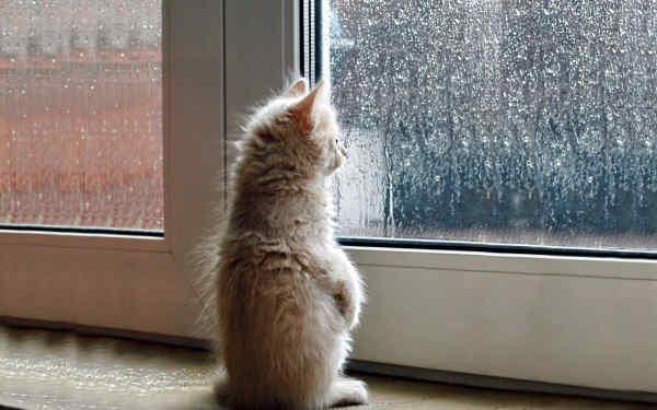 Погода на 28 серпня: в Україні буде прохолодно, на Сході дощитиме