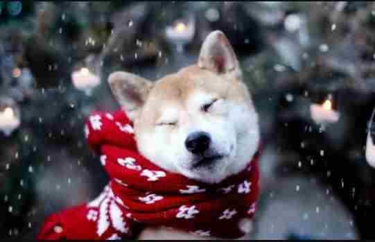 Погода на 22 січня: морози знову посиляться