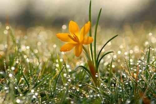 Погода на 5 квітня: в Україні буде сонячно і тепло