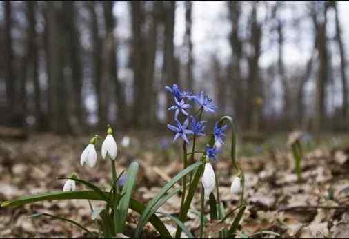 Погода на 24 березня: в Україні буде сонячно та по-весняному тепло