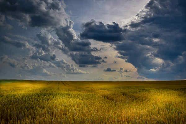 Atlantic Council: Україна може не стати аграрною супердержавою через зміну клімату