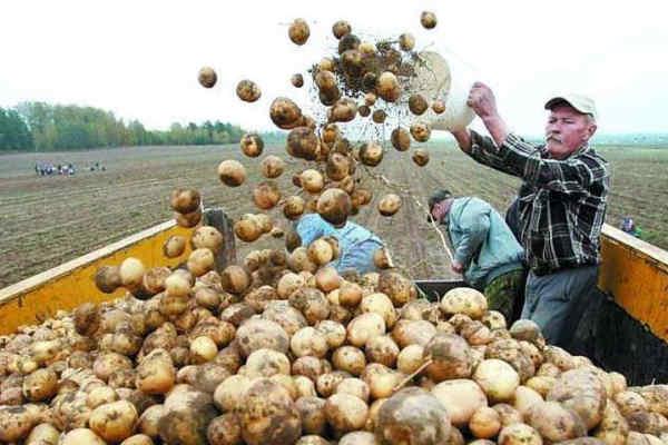 Мінекономіки планує заборонити імпорт картоплі з Росії
