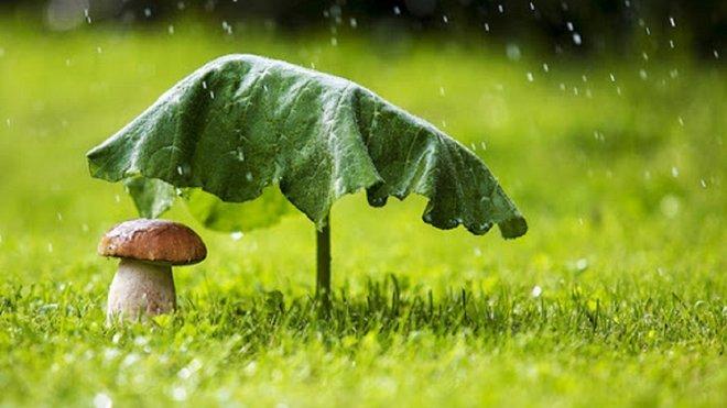 Погода на 12 серпня: у частині областей дощитиме, а на півночі суттєво похолодає