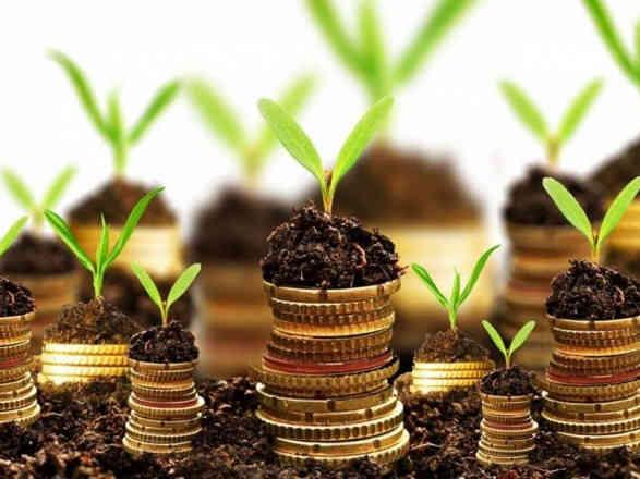 У Мінекономрозвитку назвали вартість гектара після відкриття ринку землі