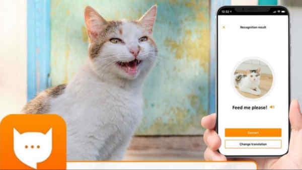 Розробник Alexa створив застосунок MeowTalk для перекладу «мови» котів