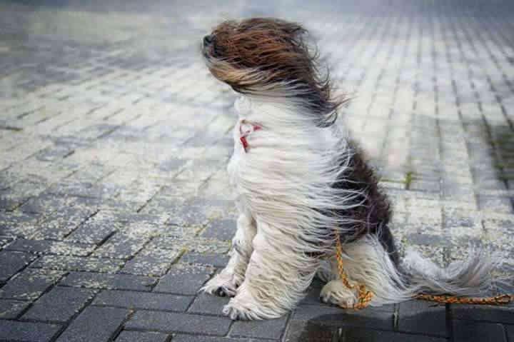 Погода на 21 січня: Сухо, але вітряно