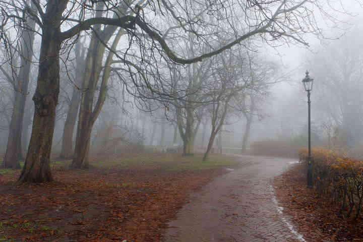 Прогноз погоди на 14 грудня: в Україні дощитиме, на півдні до +12