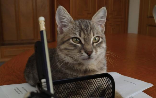В Ухані знайшли коронавірус у 15% кішок